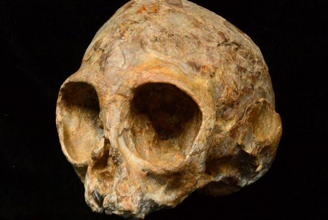 Ученые отыскали череп таинственного предка людей