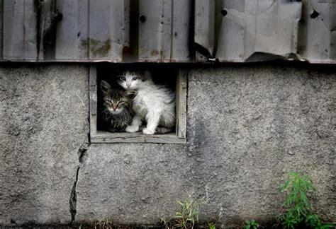 Нападение на кошачий приют в Харькове: животных кромсали лопатой, никто не выжил