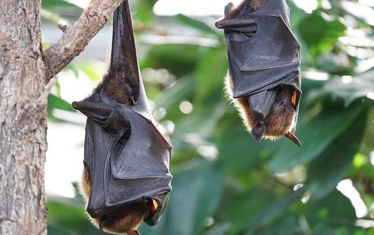 Ученые: животный мир борется против человечества, изобретая все новые и смертоносные вирусы, - BBC