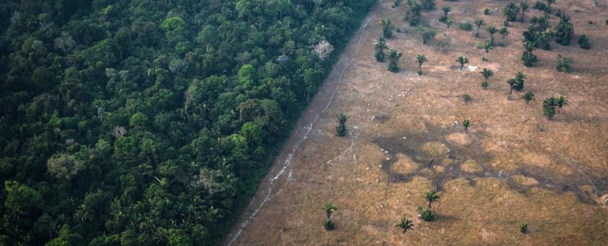 Леса Амазонки могут быть новым источником коронавируса: болезнь распространится быстро