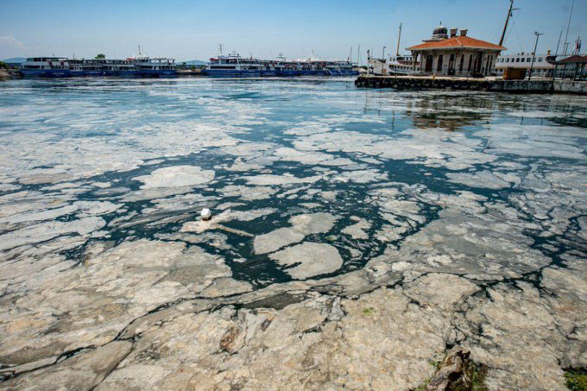 Черное море рискует повторить судьбу Мраморного, покрывшегося толстым слоем слизи
