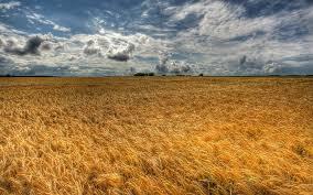 Украина снова станет житницей Европы: с 1 октября  большинство продукции сельского хозяйства не будут облагаться пошлинами