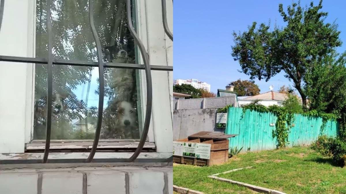 В доме погибшего мальчика из Черкасс умирают от голода собаки