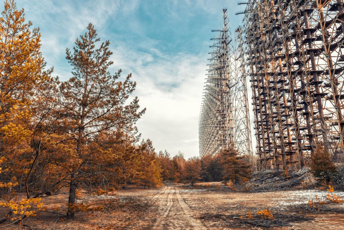 В Чернобыле была обнаружена птица-хищник, которую редко где можно встретить