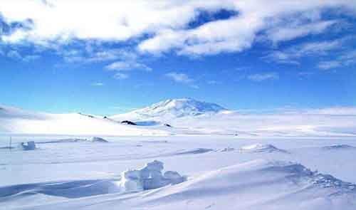 Антарктида, животные, ученые, мертвые организмы, вся правда, сенсация, находка, археологи, вся правда, подробности, Интернет, останки