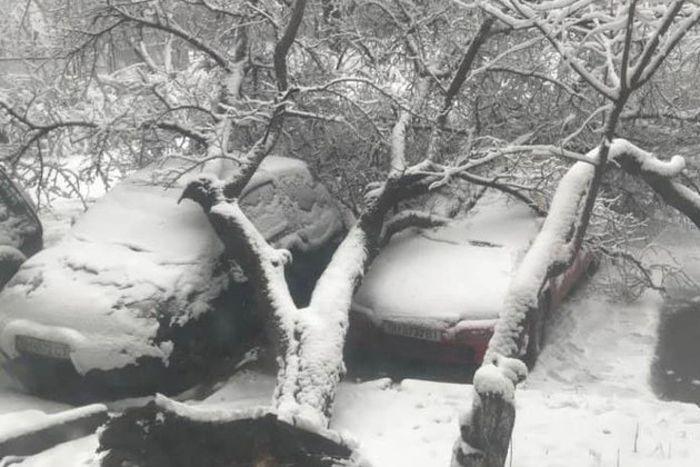 На Одессу обрушилась снежная буря: непогода валила деревья, город парализован