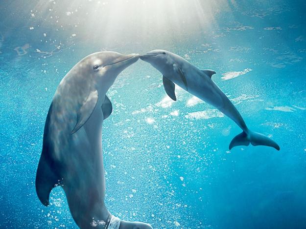 Уникальный случай в Черном море: самка дельфина позволила человеку принять у нее роды