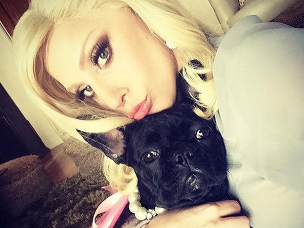 Певицу Леди Гагу шантажируют любимыми собаками, требуя полмиллиона