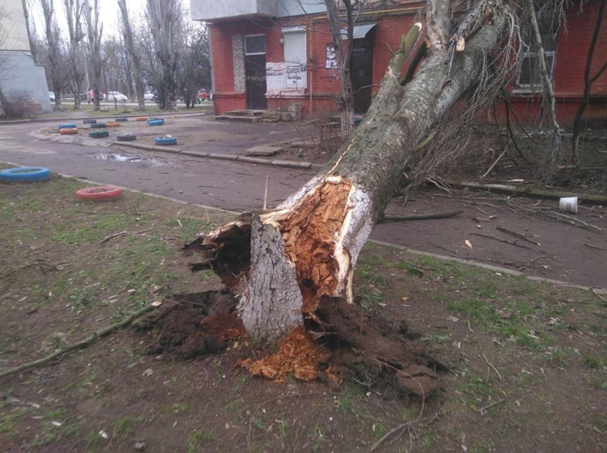 Ураган в Херсоне: деревья падают на балконы и проезжую часть - кадры