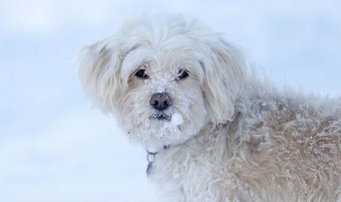 Ученые вернут к жизни собаку, замороженную 12 тысяч лет назад