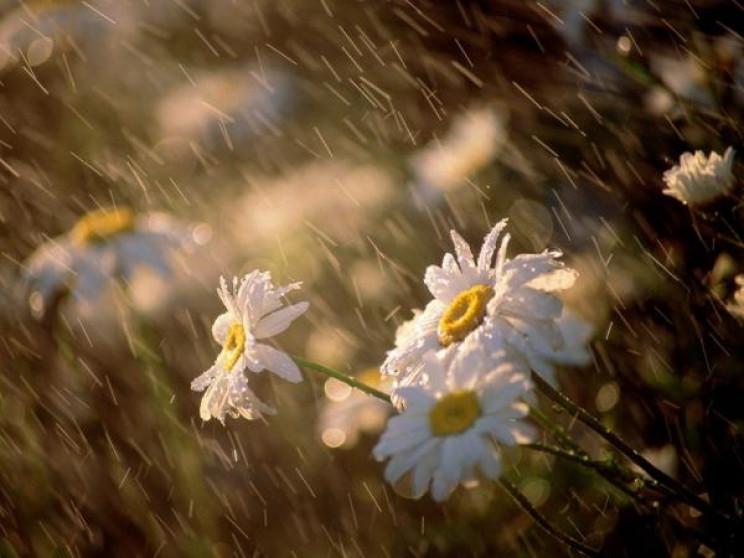 Погода на выходные: на Украину обрушатся дожди с грозами, но одному региону повезет