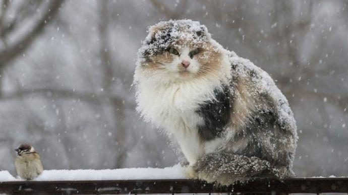 Синоптики рассказали, откуда в Украину придут сильные морозы: ультраполярное вторжение