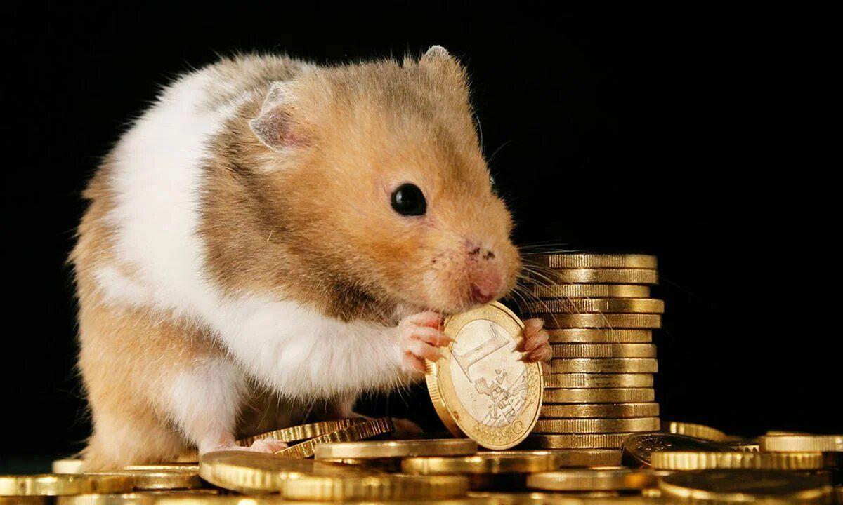 Хомяк, занимаясь продажей и покупкой криптовалюты прямо в клетке, помог разбогатеть своему хозяину.