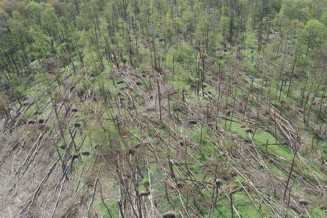 Под Житомиром мощный смерч снес 20 гектар леса - последствия сняли с воздуха
