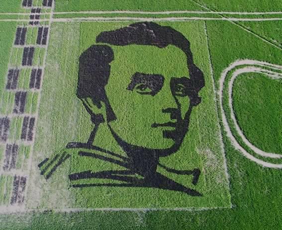 Потрясающее фото с воздуха: украинские ученые рисом высеяли портрет Тараса Шевченко, его можно увидеть даже из космоса