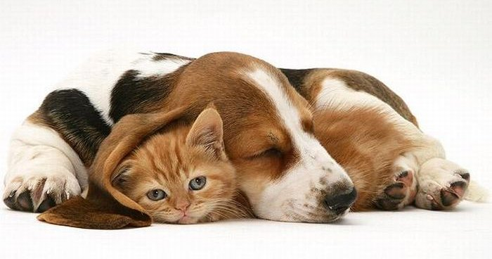 Защита животных, Одесса, криминальные новости, Украина, кот и собака