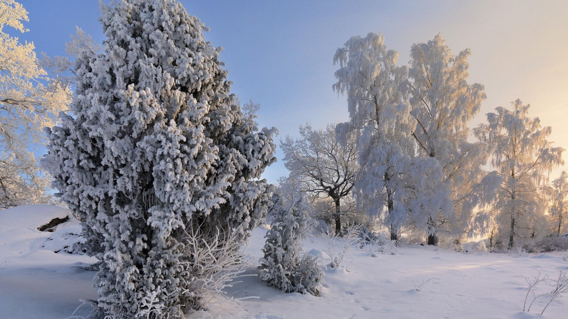 Украину ожидает самая холодная зима за последние сто лет: климатологи прогнозируют невероятные морозы