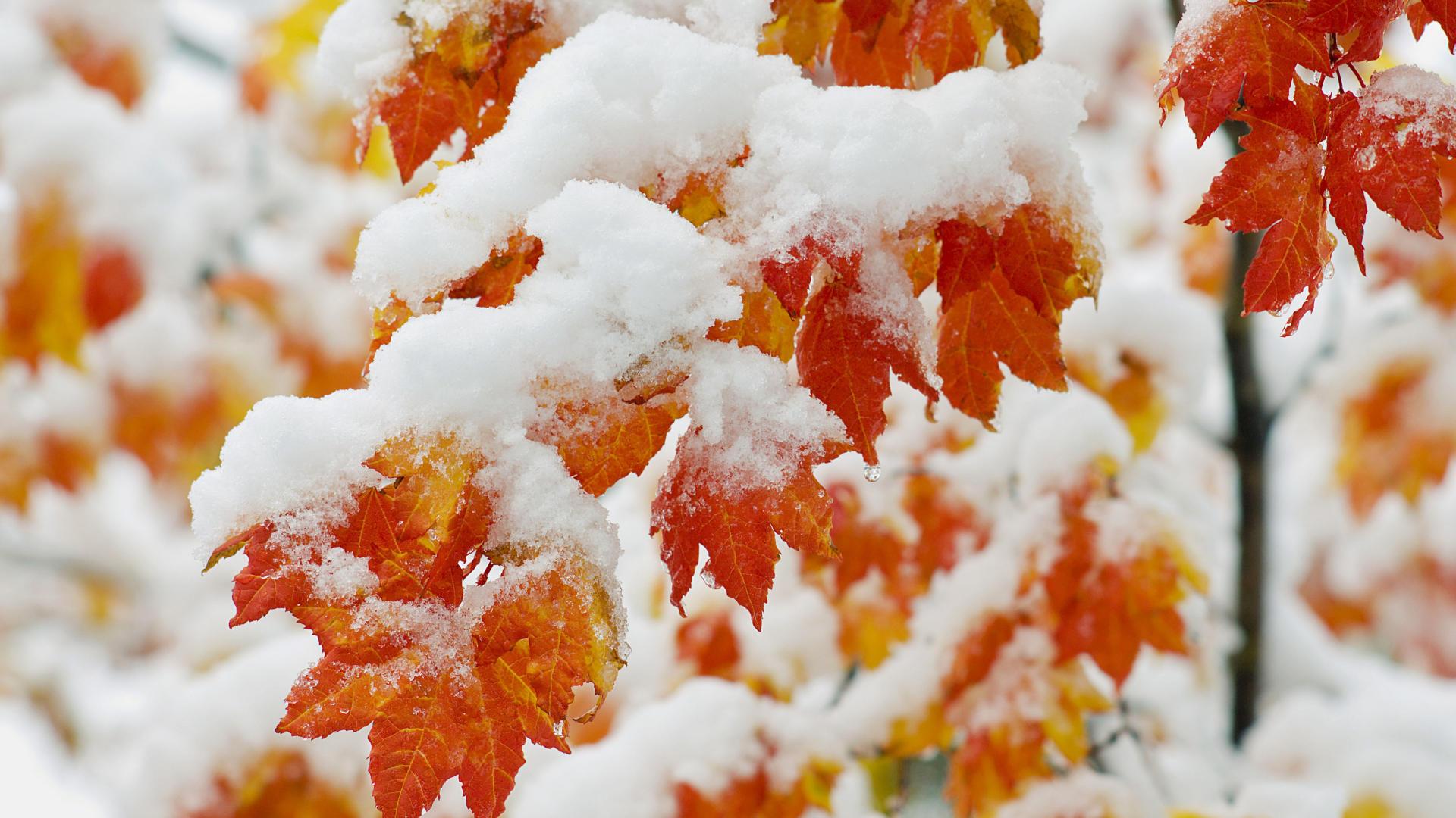 Осень картинки в ноябре