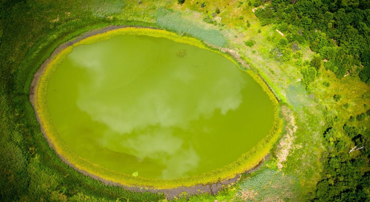 """""""Око Полесья"""": в Чернобыле обнаружили необычное озеро почти идеальной формы"""