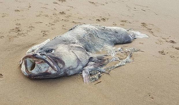 австралия, рыба, чудовище, происшествия, фото, животные