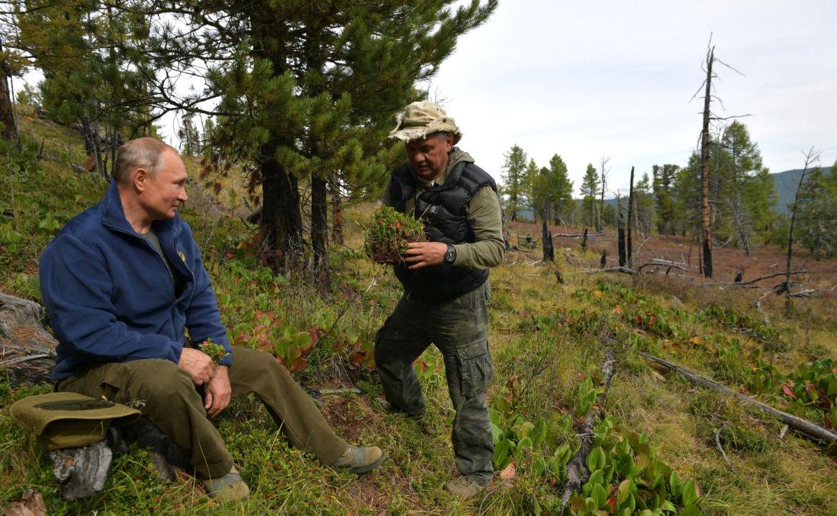 Путина и Шойгу в тайге едва не затоптало стадо маралов
