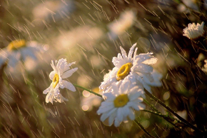 Солнечная полоса по центру и проливные дожди с градом: какой будет погода в Украине на выходных