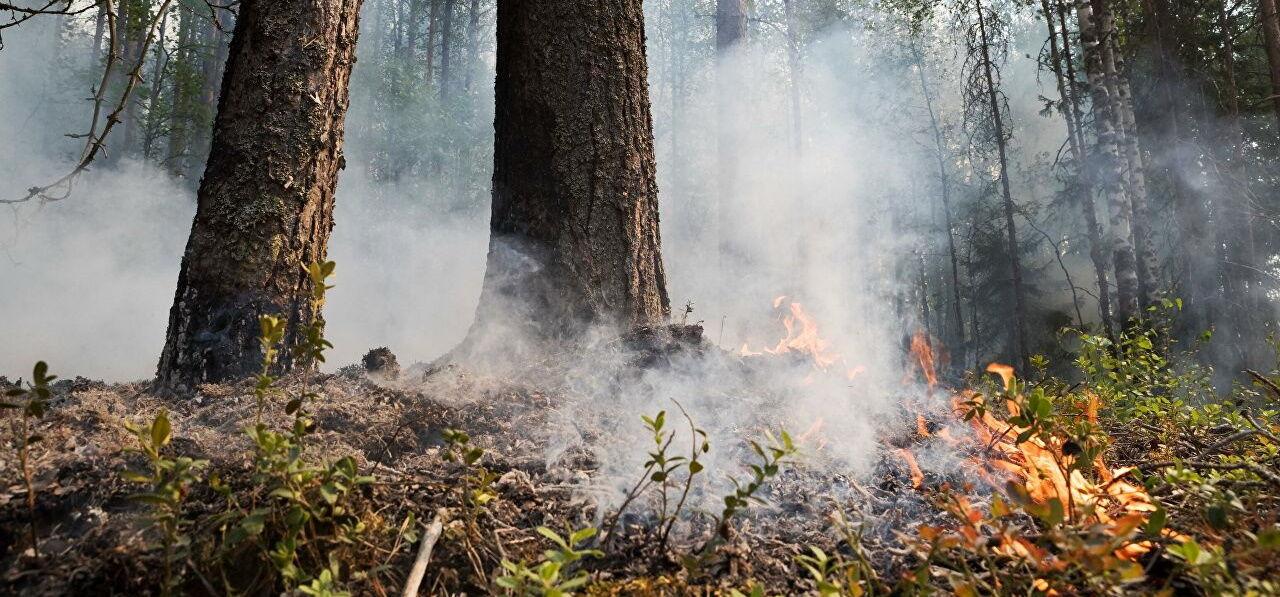 Пожары в РФ из-за их нетушения перекинулись через границу в Финляндию