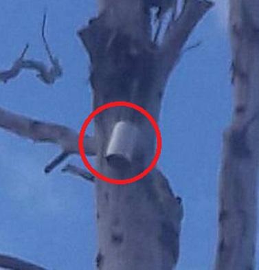 Кадры из Балаклеи: граната российского производства зацепилась на дереве и не разорвалась. Доказательство агрессии РФ прямо перед нашим носом!
