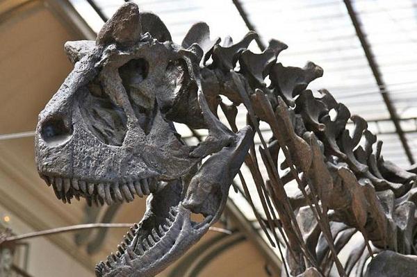 """Самый страшный звук всех времен: американские ученые """"оживили"""" голос тираннозавра"""