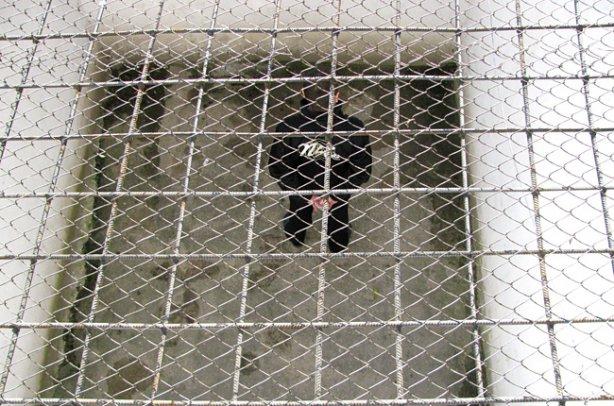 В Макеевке заключенные остаются в поврежденной снарядом колонии