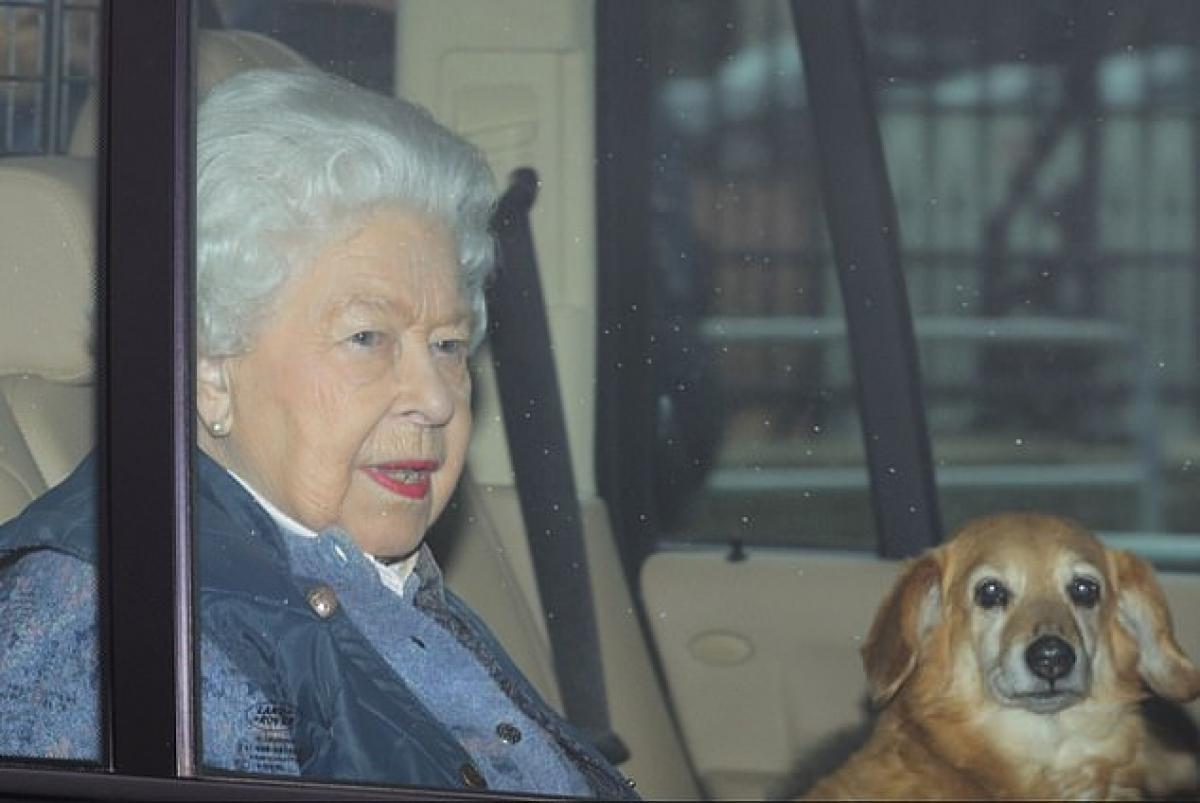 Королева Елизавета II потеряла верного друга, 13-летнего пса дорги