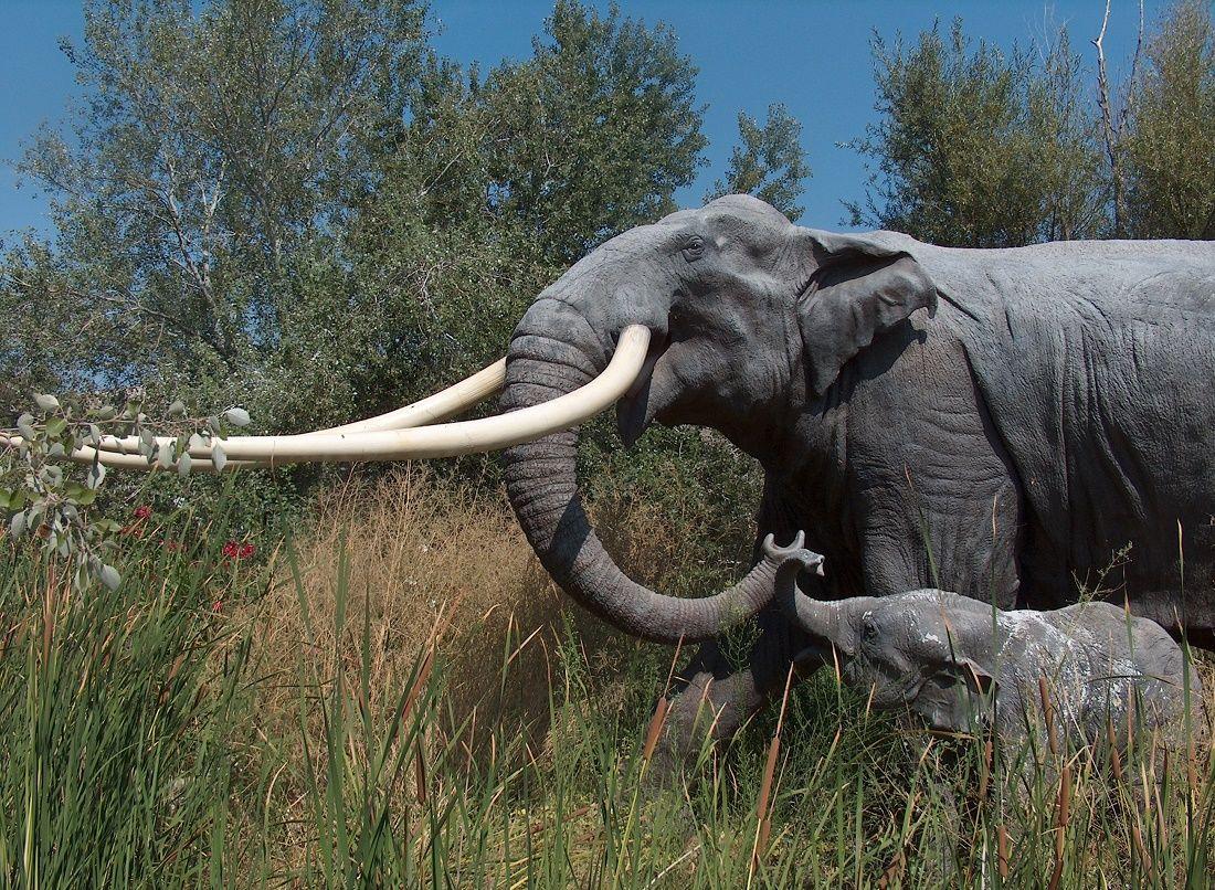 Невероятная находка восхитила палеонтологов: ясли доисторических прямобивневых слонов обнаружены в Испании