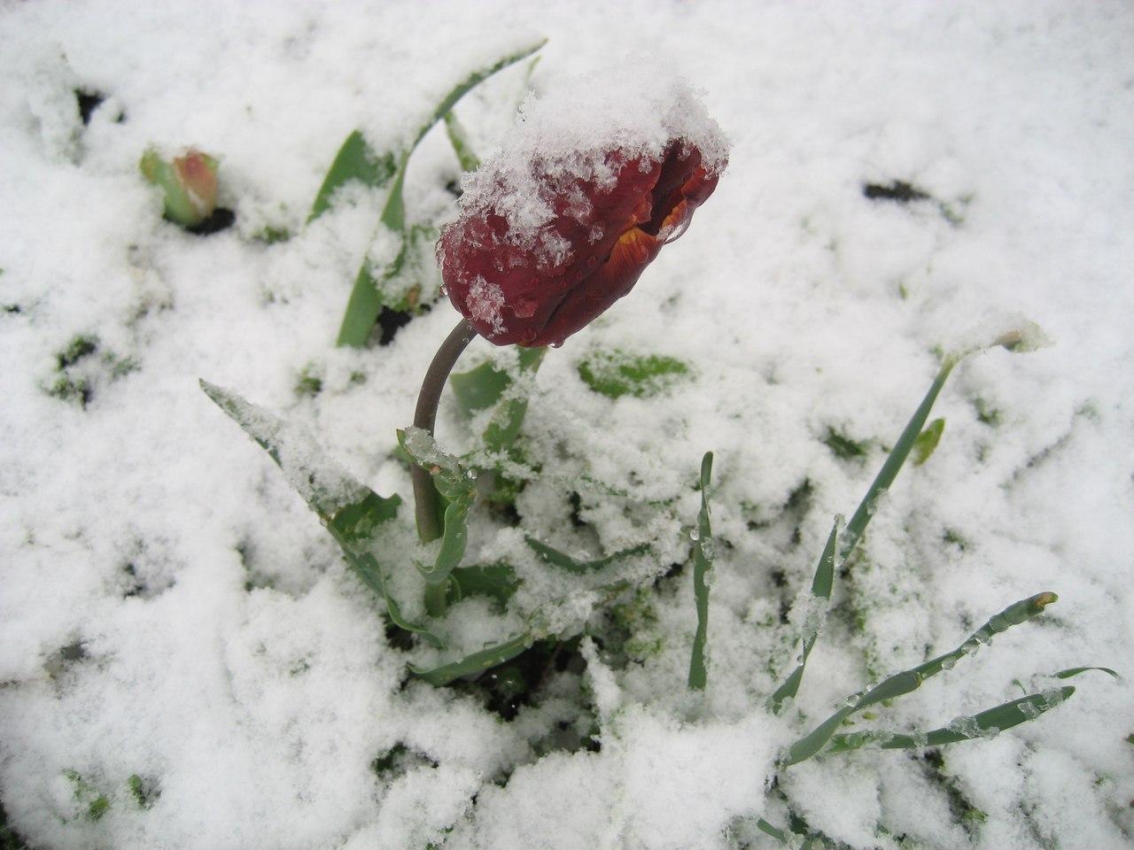 Женщине днем, открытка в апреле выпал снег