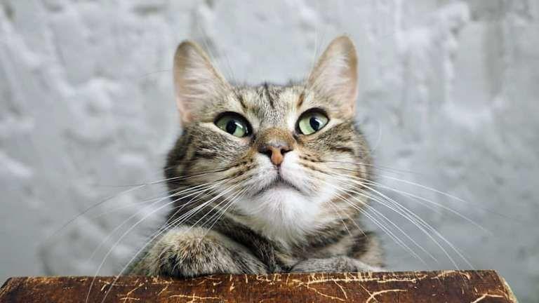 В России у кота обнаружили коронавирус: с чего все началось