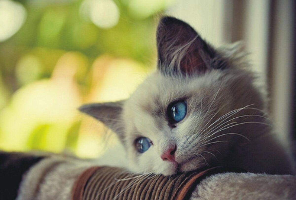 Ученые выяснили, насколько долго хозяевам можно оставлять своих кошек в одиночестве