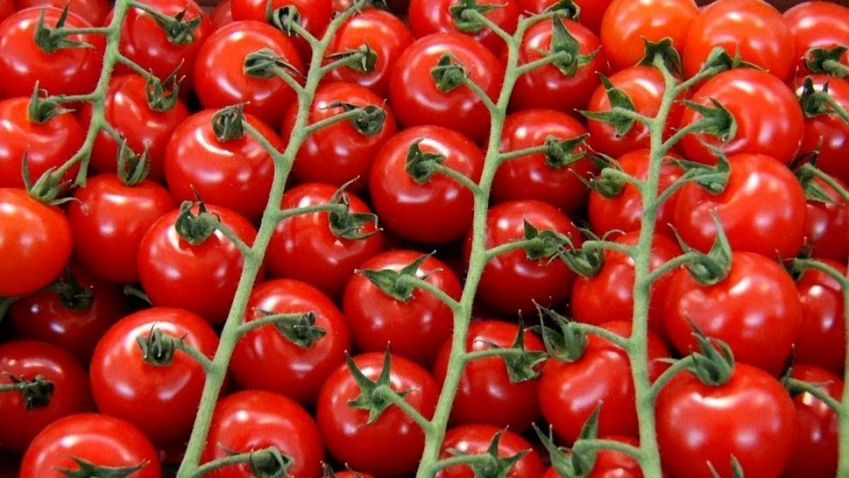 Кремль в ответ на военные действия Турции в Сирии ударил по помидорам: детали