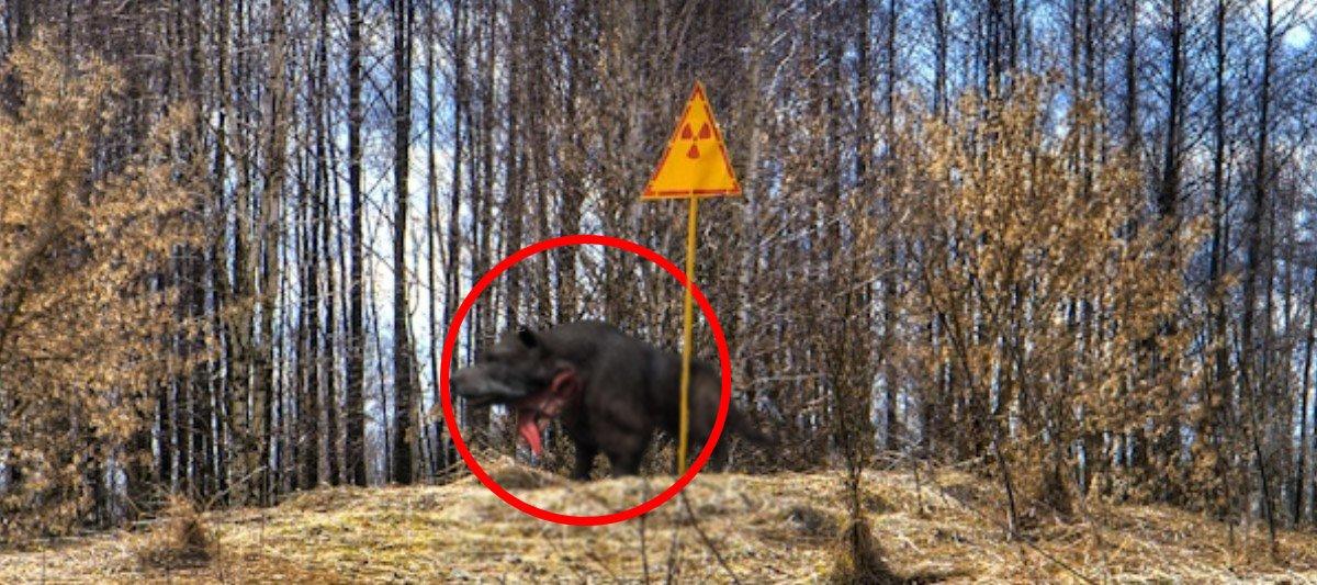 В Чернобыле пришельцы начали создать мутантов-кровососов для порабощения человечества