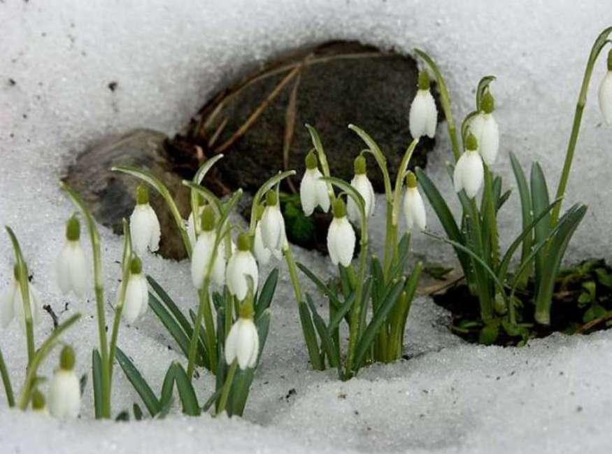Приход весны празднование фото