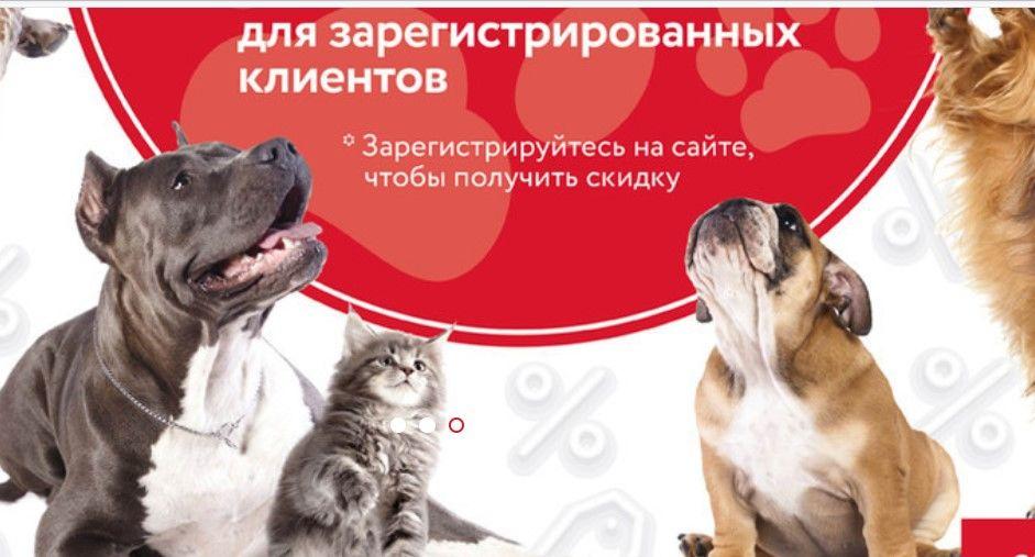Как выбрать корм для кошек: краткий путеводитель владельца