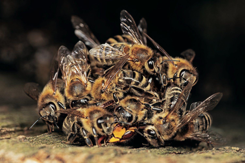 Скорая прибыла за 4 минуты, но не спасла: под Ровно мужчина лишился жизни из-за пчел