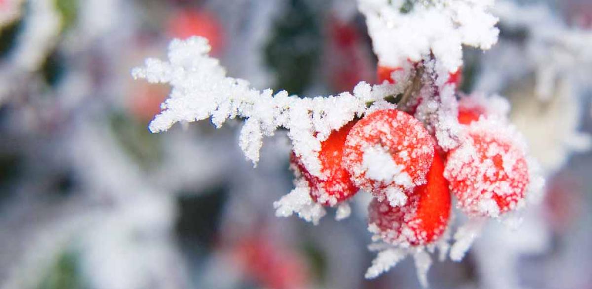 погода в украине, прогноз погоды, тепло, зима, декабрь, погода в декабре, прогноз на декабрь, новости украины