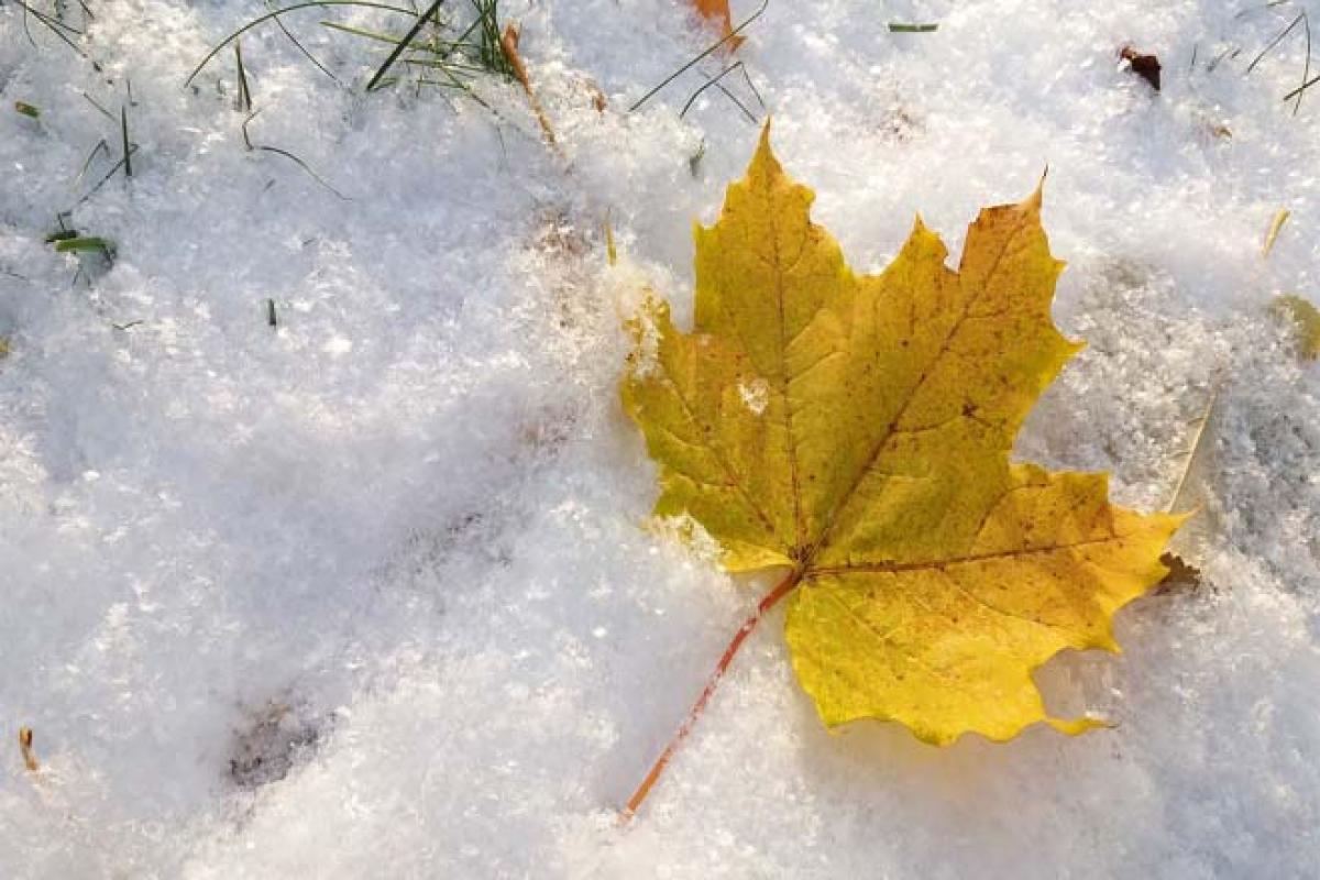 погода, синоптики, февраль, погода  в украине, погода в феврале, новости украины