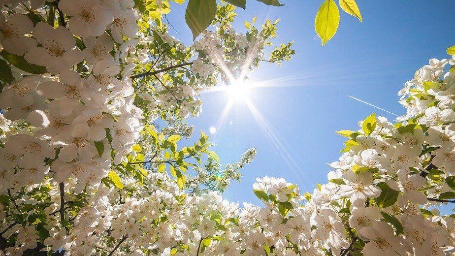 Прогноз погоды в Украине на май: хорошо потеплеет, но будут грозы и дожди