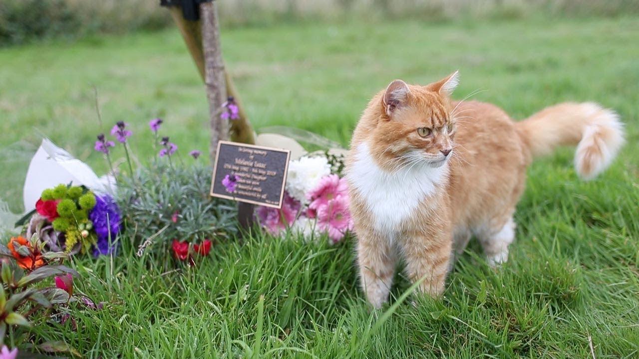 Ливерпуль, Пэдди, кот, общество, похороны, происшествие, животные