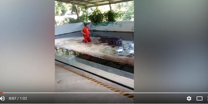 Это видео точно не для слабонервных: на знаменитом шоу крокодилов в Таиланде рептилия чуть не оторвала голову укротителю – леденящие кровь кадры