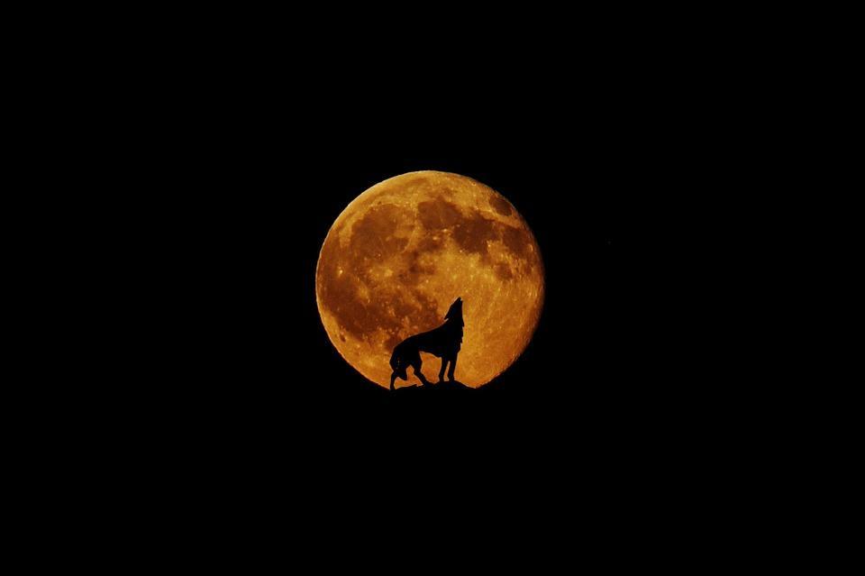луна,полнолуние, 14 октября, гороскоп, знаки зодиака, гороскоп на октябрь, происшествия