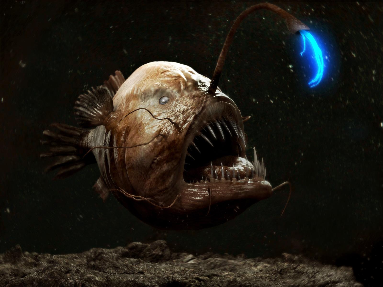 """""""Я никогда не видел ничего подобного"""", - биологи поражены необычными жителями океанских глубин. Кадры"""