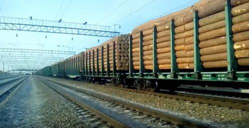 Жители Сибири бьют тревогу: еще 2 миллиона гектаров тайги отдано под варварскую вырубку Китаю