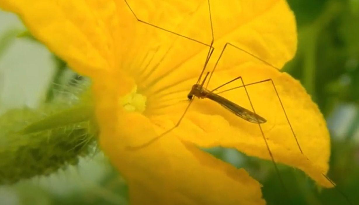 """""""Выход всегда есть"""": как избавиться от комаров - 5 простых способов"""