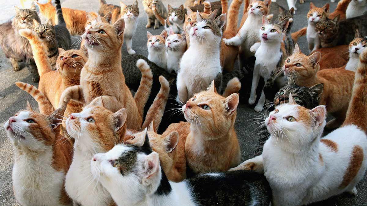 У украинки дома живут 70 котов: появилось видео – на питание каждый месяц уходит по 8000 грн